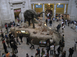 Museum: National Museum of Natural History, Washington, DC