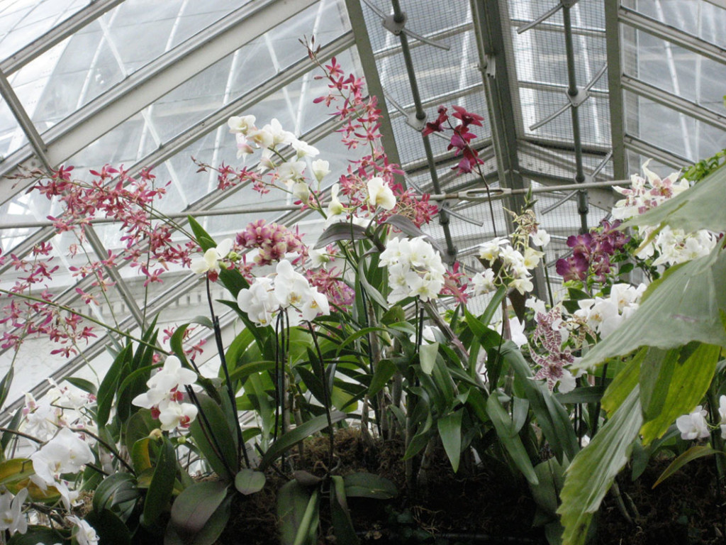 Enid Haupt Conservatory at the New York Botanical Garden