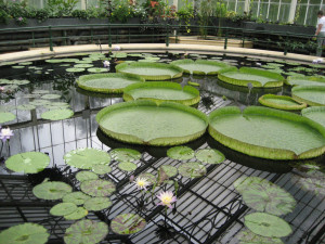 Conservatory: Waterlily House, Kew Royal Botanic Gardens