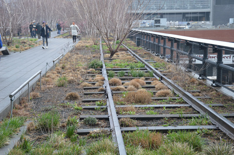 Railroad tracks and plantings