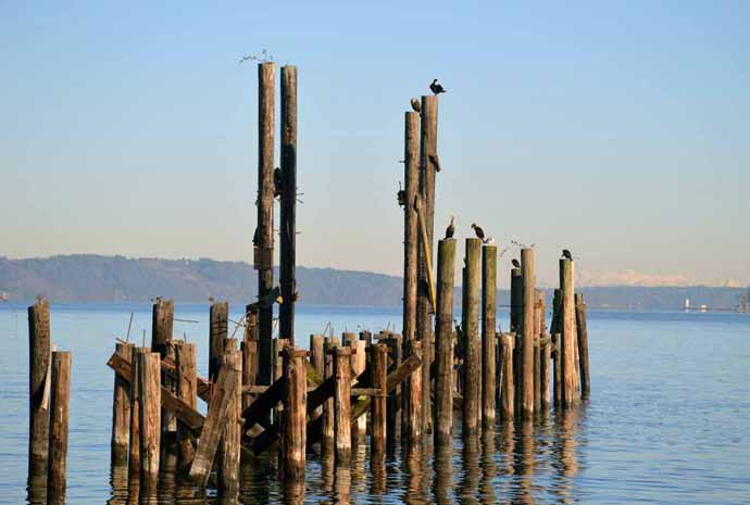 Nearby nature - Pilings and birds, Dickman Mill Park, Tacoma, WA